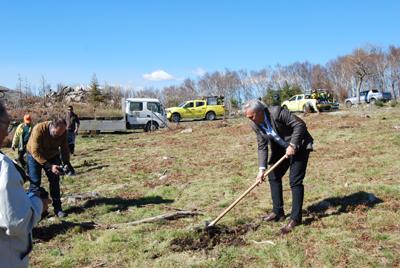Município plantou mil árvores na Cabreira