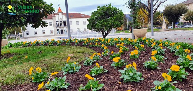 Em pleno Outono, a Câmara Municipal não descuida os seus jardins. Amores perfeitos e  outras espécies de Inverno   antecipam a Primavera.